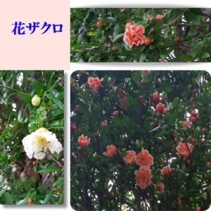 Photo_20200603163701